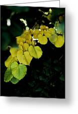 Tree Leaves In Yellow Green Greeting Card