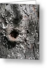 Tree Lichen Hole Greeting Card