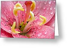 Tree Lily Upclose With Ant Greeting Card