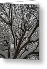 Tree Limb 4 Greeting Card