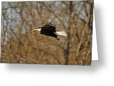 Tree Line Flight Greeting Card