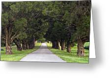 Tree Lined Drive - D008564 Greeting Card