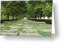 Tree Lined Greeting Card