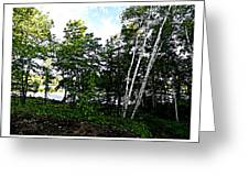 Tree Lined Lake Greeting Card by Dianne  Lacourciere