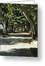 Tree Lined Promenade Greeting Card