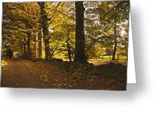 Tree Lined Road Covered With Fallen Greeting Card by John Short