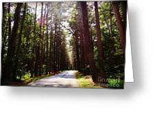 Tree Lined Road Greeting Card by Crystal Joy Photography