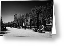 Tree Lined Seafront Promenade Salou Catalonia Spain Greeting Card