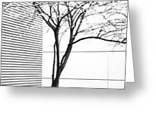 Tree Lines Greeting Card by Darryl Dalton