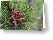 Tree Me Greeting Card by Sheldon Blackwell