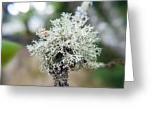 Tree Moss 2 Greeting Card
