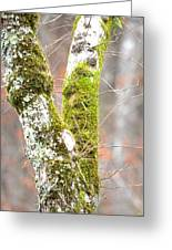 Tree Moss Abstract Greeting Card