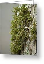 Tree Moss Closeup 2013 Greeting Card