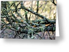 Tree Moss Greeting Card