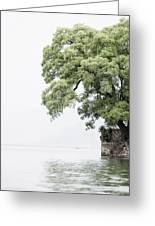 Tree Next To A Lake Greeting Card