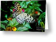 Tree Nymph 2 Greeting Card