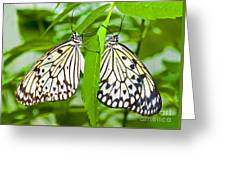 Tree Nymph Butterflies Greeting Card