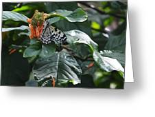 Tree Nymph On Blossom Greeting Card