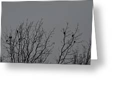 Tree Of Birds Greeting Card