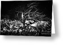 Tree Of Darkness Greeting Card