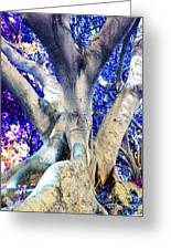 Tree Of Life Photography On Canvas Poster Beautiful Unique Fine Art Prints For Your Home Decoration Greeting Card