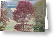Tree Of Red Greeting Card