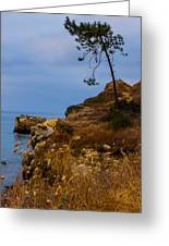Tree On A Cliff II Greeting Card