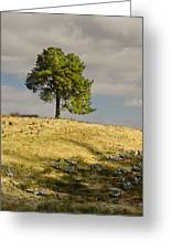 Tree On A Hill Vertical Greeting Card