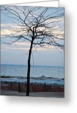 Tree On Beach Greeting Card