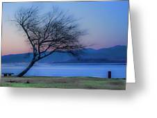 Tree On The Banks Of The River Clyde Greeting Card
