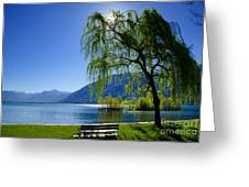 Tree On The Lakefront Greeting Card