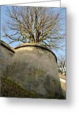 Tree On The Wall Greeting Card