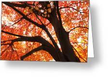 Tree Orange Blast Greeting Card