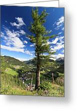 tree over Cordevole valley Greeting Card