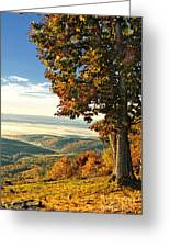 Tree Overlook Vista Landscape Greeting Card