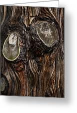Tree Owl Greeting Card