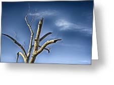 Tree Pointer Greeting Card