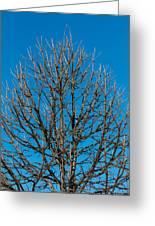Tree Profile Greeting Card