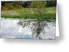 Tree Reflecting In Pond Greeting Card