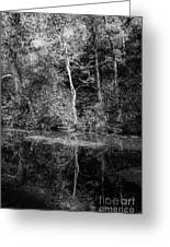 Tree Reflection In Chesapeake And Ohio Canal Greeting Card