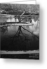 Tree Reflections On The Pond Greeting Card
