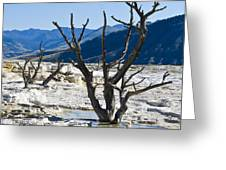Tree Remains Greeting Card