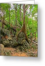 Tree Roots On Rock Greeting Card