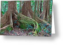 Tree Roots Tropical Rainforest Greeting Card