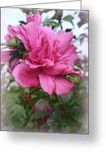 Tree Rose Of Sharon Greeting Card