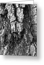 Tree Rot Greeting Card