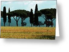 Tree Row In Tuscany Greeting Card