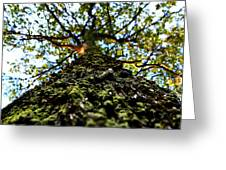 Tree Scales Greeting Card by Christian Rooney