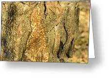Tree Self Reflections In Bark Greeting Card