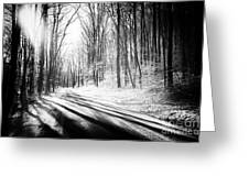 Tree Shadows Greeting Card